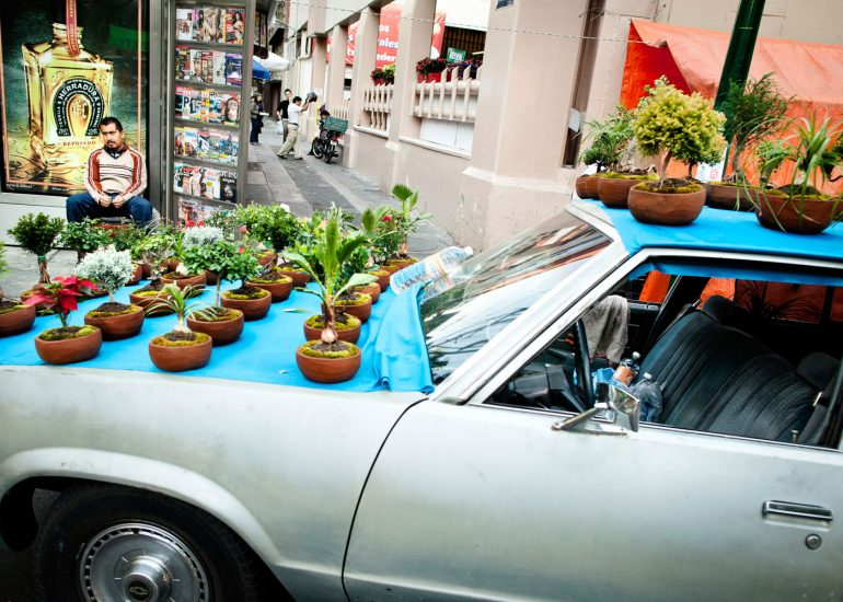 Man selling bonsai on Mexican street, photo by Roman Mlejnek